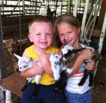 Little Tots Estate Nigerian Dwarf Goats Karakachan Dogs